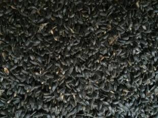 Sonnenblumenkerne schwarz 25 kg Wildvogelfutter Vogelfutter Ernte 2018